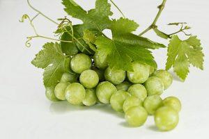 ארומותרפיה- שמן זרעי ענבים- תהילה אזולאי